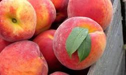 Маленькая притча про персики.